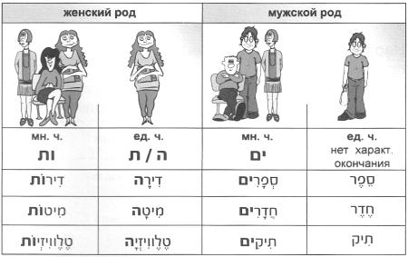 существительные мужского и женского рода
