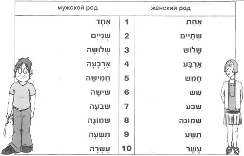 Числа в мужском и женском роде