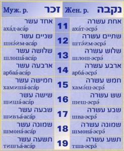числа 11-19